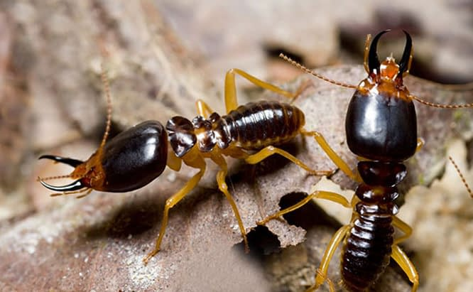 Pest Control Sydney, Insect Removal, Termite Eradication, Ants