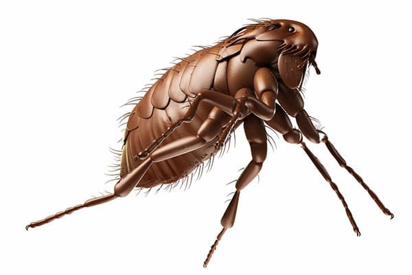 Pest Control Sydney, Insect Removal, Termite Eradication, Ants, Rodents, Possum, Bed Bug, Bird