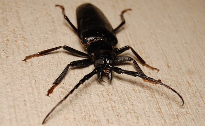 Pest Control Sydney, Insect Removal, Termite Eradication, Beetles